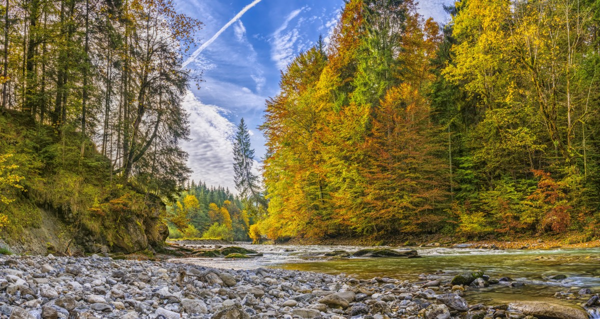 https://www.sportabili.org/sites/default/files/2019-04/alpine_bavaria_trees-1442041.jpg